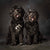 Pet Portrait of two Portuguese Water Dogs in colour by PHOTOGENIC Dalkey