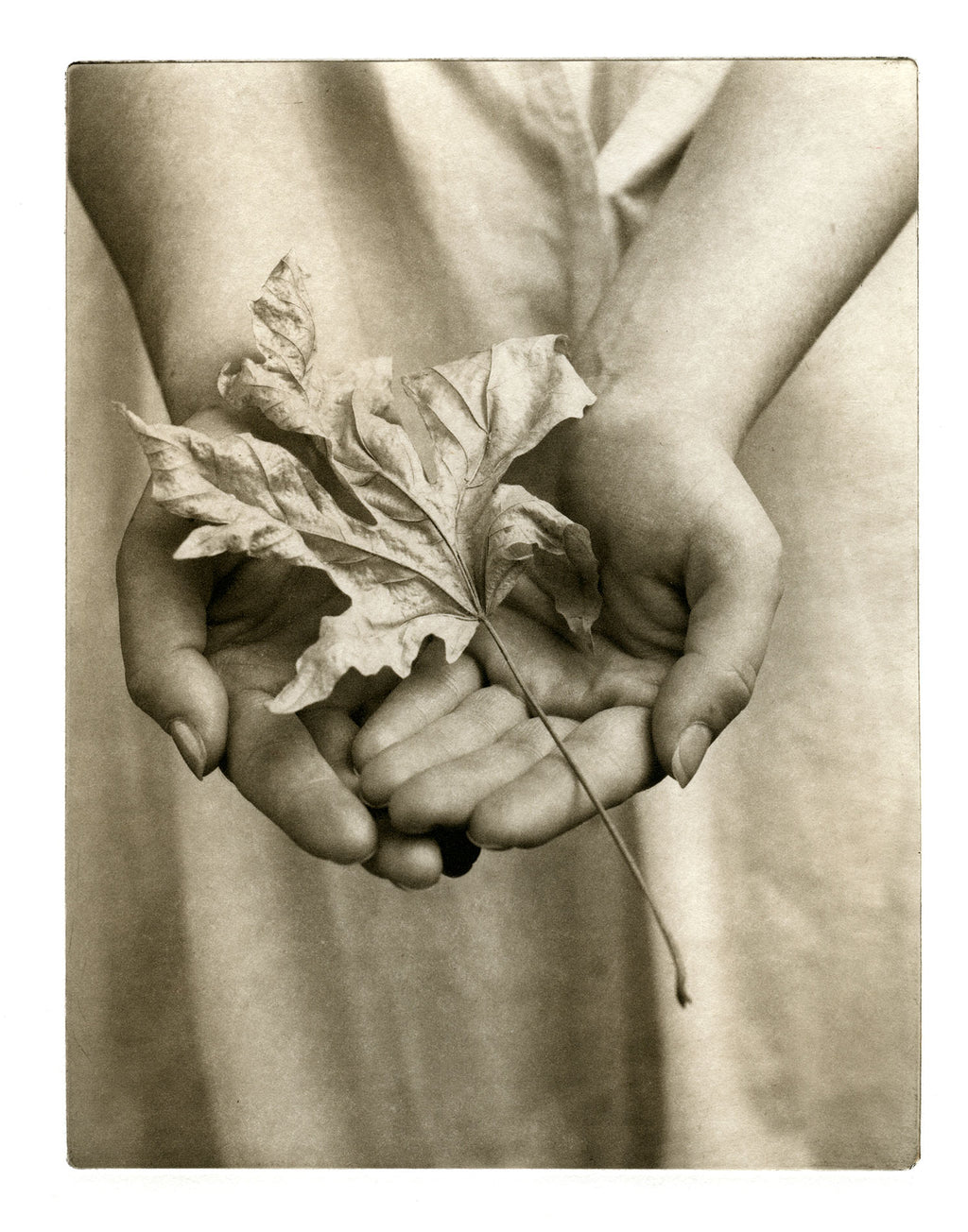 Maple fallen - Polymer photogravure print - Edition 2021