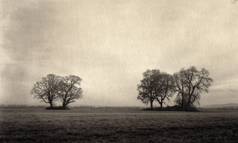 5 trees Sauvie Island