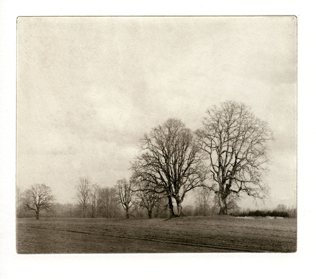 Sauvie trees   - Polymer photogravure print - Edition 2021
