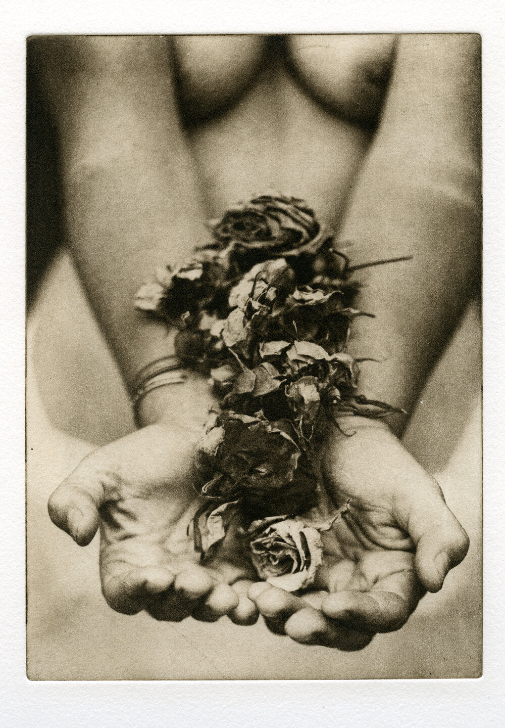 Polymer Photogravure - Roses #2