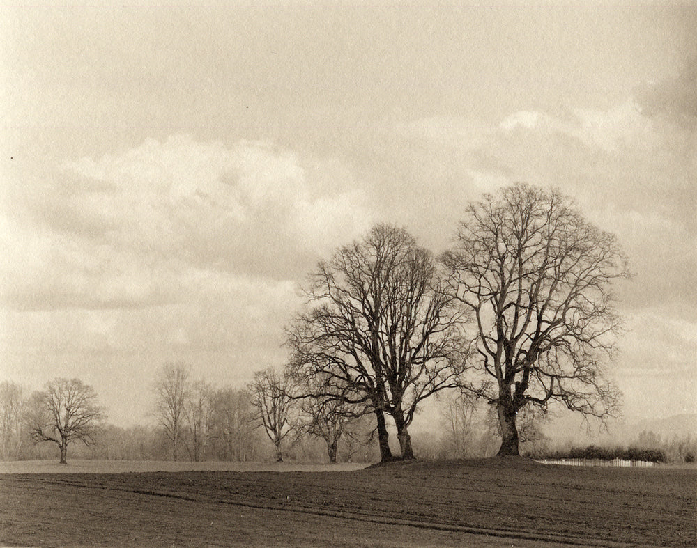 Sauvie Island trees