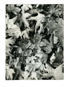 Sauvie Island leaves   - Polymer photogravure print - Edition 2021