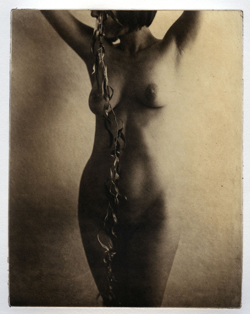 The vine   - Polymer photogravure print - Edition 2021