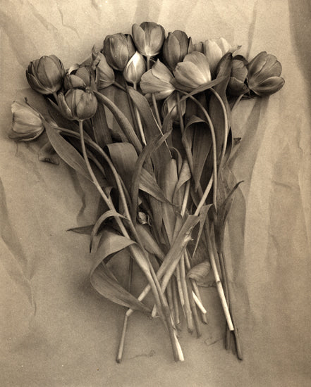 Tulips on paper