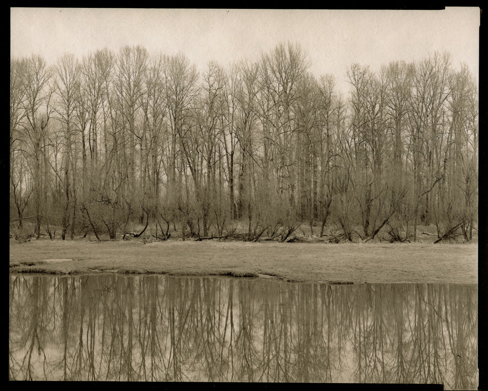 Winter trees Sauvie Island