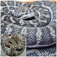 Load image into Gallery viewer, Caramel Axanthic (Ghost) Carpet Python - ON HOLD