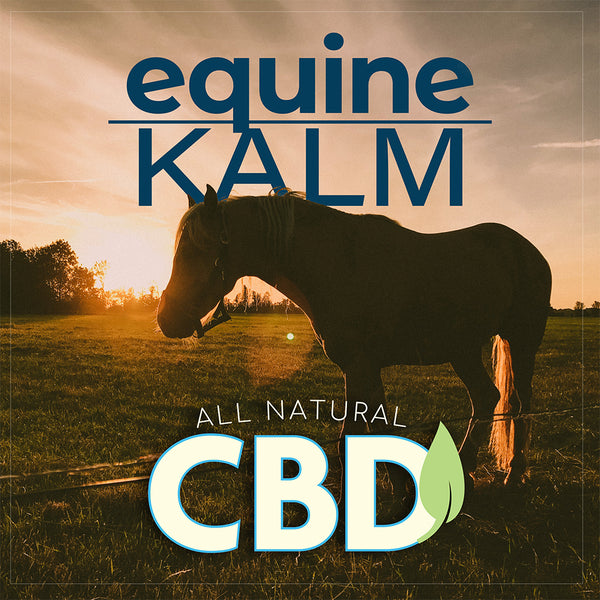 Let me share how EquineKALM has helped my horses