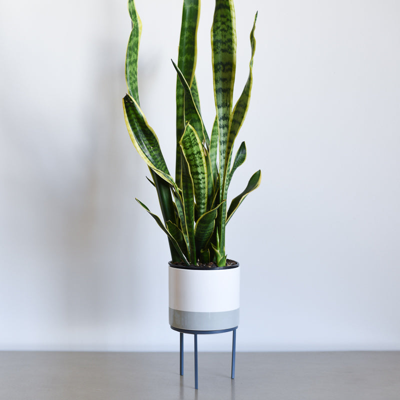 Plant Stand - Gray
