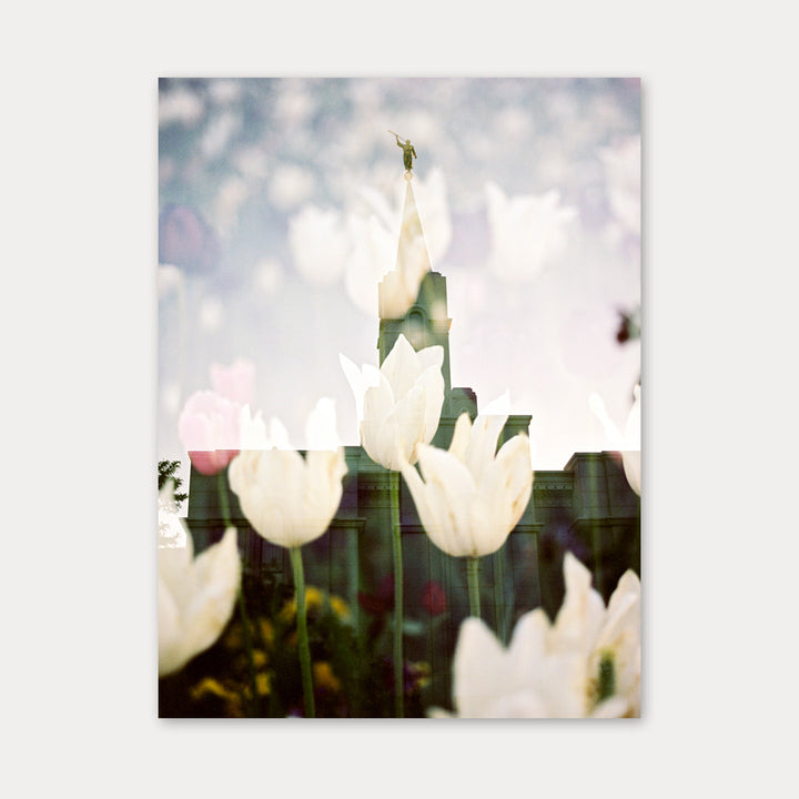 Jessica's Photography - Bountiful LDS Temple - White Tulips