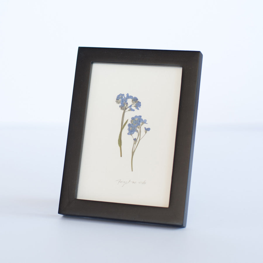 Forget-me-nots, Framed