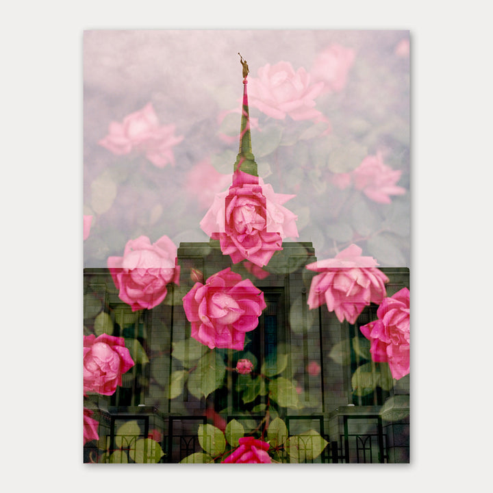 Jessica's Photography - Ogden LDS Temple - Rose Bush 1