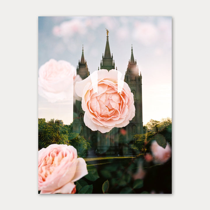 Jessica's Photography - Salt Lake LDS Temple - Garden Rose