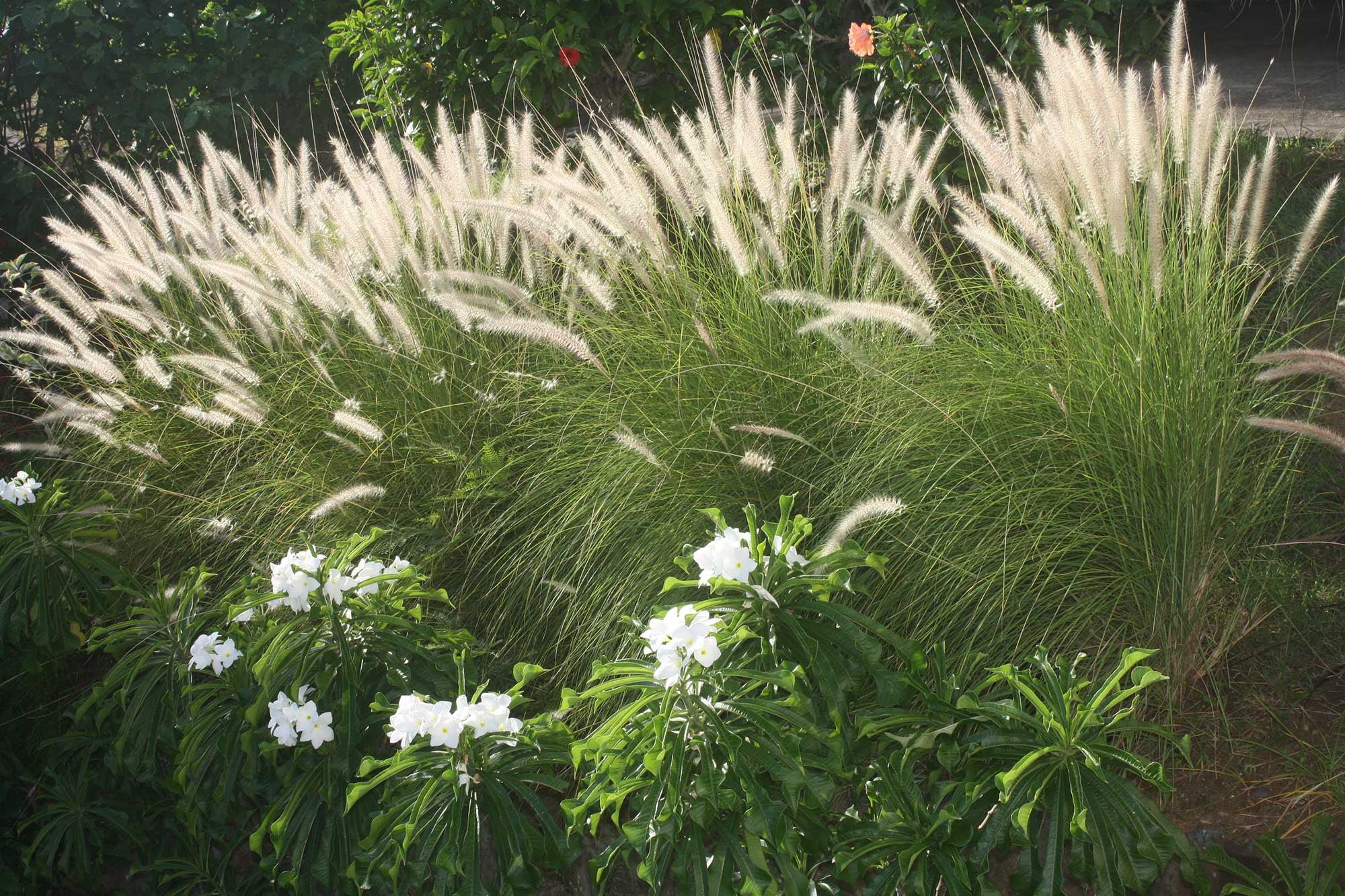 Grasses and Flowers Mustique