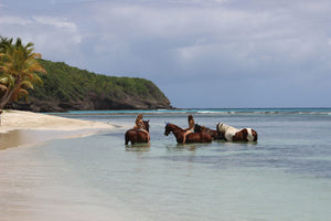 swimming with horses, Lagoon Bay Mustique