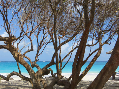 through the trees, Macaroni beach Mustique