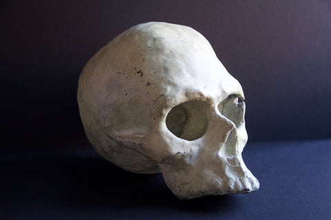 Skull Bronze Sculpture by Stephanie Burns