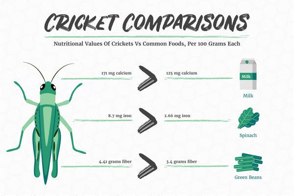 Edible Insects Cricket Nutritional Profile