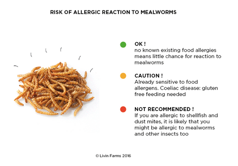 Allergy_Risk_Mealworms