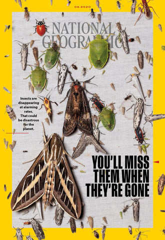 https://www.nationalgeographic.com/content/dam/magazine/rights-exempt/2020/05/national-geographic-magazine-may-2020-insects-disappearing.ngsversion.1587649202348.adapt.1900.1.jpg