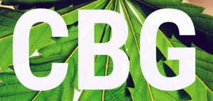 CBG: The New Kid on The Block |  Hemp House Driect