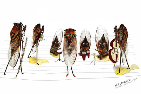 Cicadas dress rehearsal. Australian original art print.