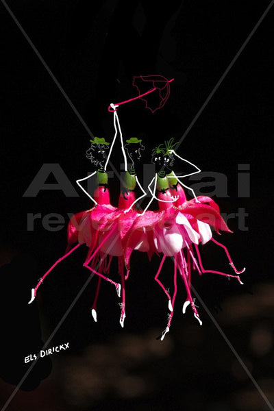 Frolicking fuchsias