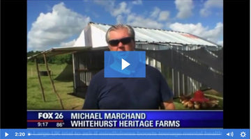 Fox 26 News Houston: Sally MacDonald Visits Whitehurst Heritage Farms