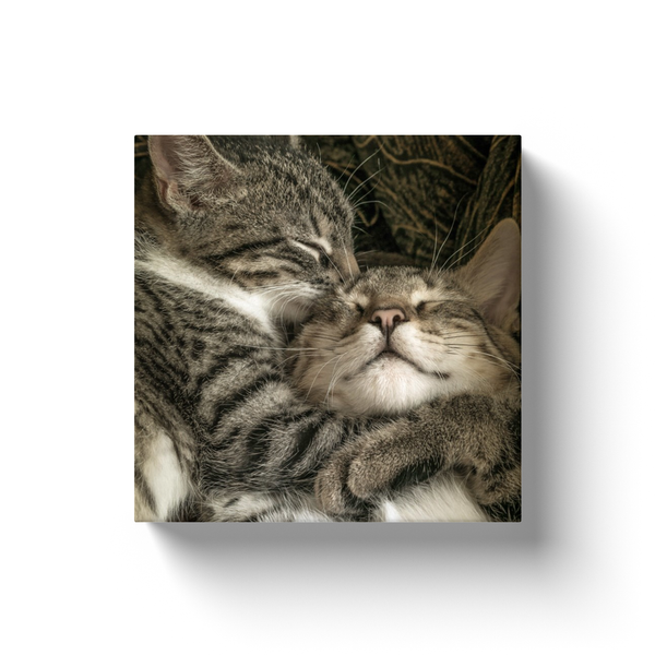 Best Friend Cats - Canvas Wraps - Not Bad Gifts