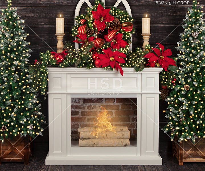 Christmas Poinsettias (small) photography backdrop & background