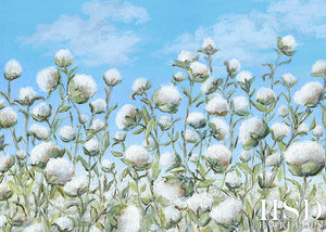 Cotton Fields - HSD Photography Backdrops