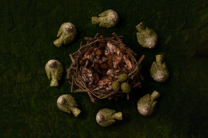Moss Birds - HSD Photography Backdrops