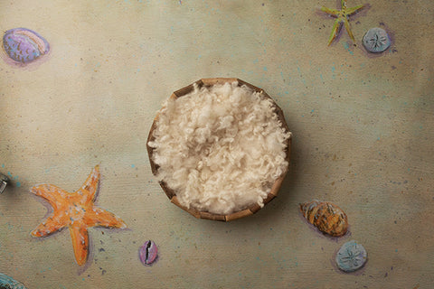 Newborn Digital Backdrop | Sea Shells by the Seashore