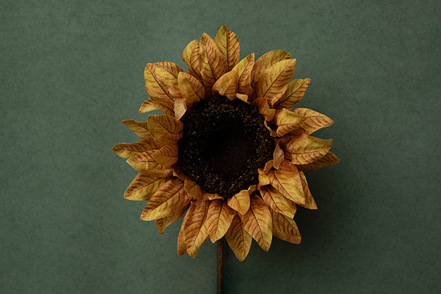 Sunflower Delight Coll. | Sweet Sunflower | Digital photography backdrop & background