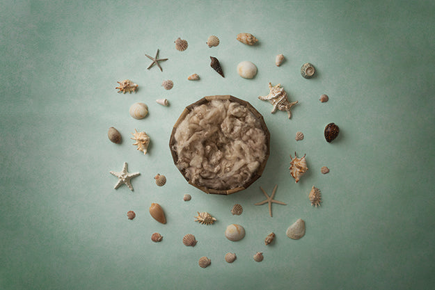 Digital Backdrop | Under The Sea Coll. | Seashells