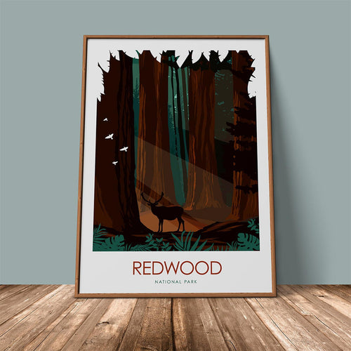 Redwoods National Park Print Poster