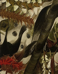 Detail of 'Splint' a botanical oil painting by contemporary artist Andy Harper RCA