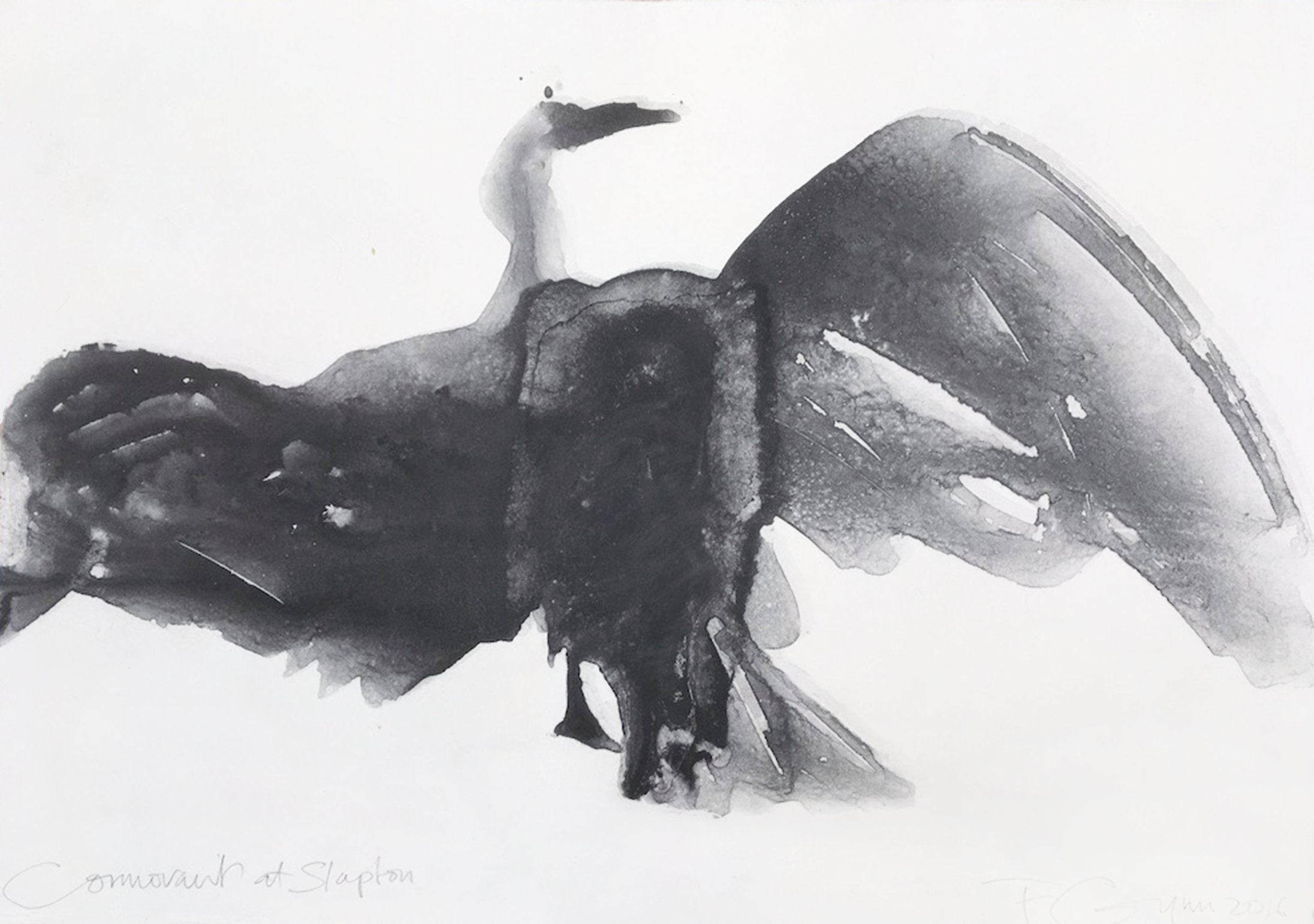'Cormorant at Slapton', an observational monotype by contemporary, woman artist Frances Gynn