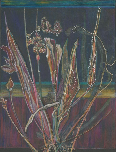 Reeds & Weeds, sharla r hicks artist, mixed media, monoprint, color pencil, pen and ink illustration
