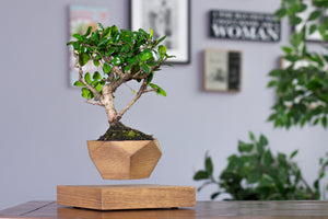 Levitating Bonsai Pot Walnut