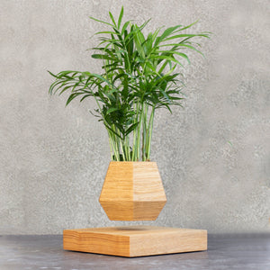 Levitating Pot Classic Oak