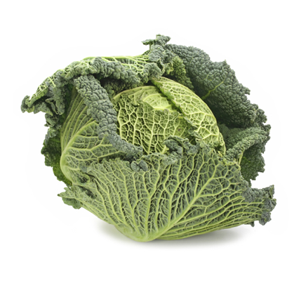 Cabbage Savoy - 1 head