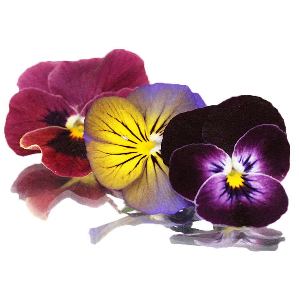 Edible Flowers - 1 pkt