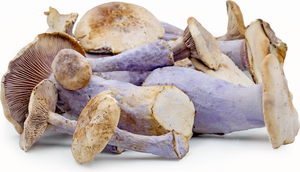 Load image into Gallery viewer, Mushroom Wild - Pied Bleu 250g