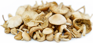 Load image into Gallery viewer, Mushroom Wild - Mousseron 250g