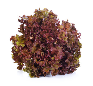 Load image into Gallery viewer, Lettuce - Lollo Rosso - each