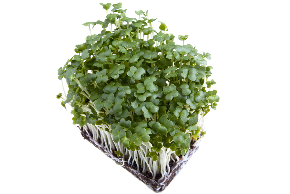 Load image into Gallery viewer, Mustard Cress - 1 punnet