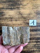 Load image into Gallery viewer, Medium Petrified Wood Specimen with Polished Top - Grounding // Calming