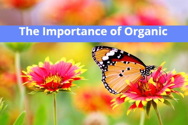 Importance of Organic skincare