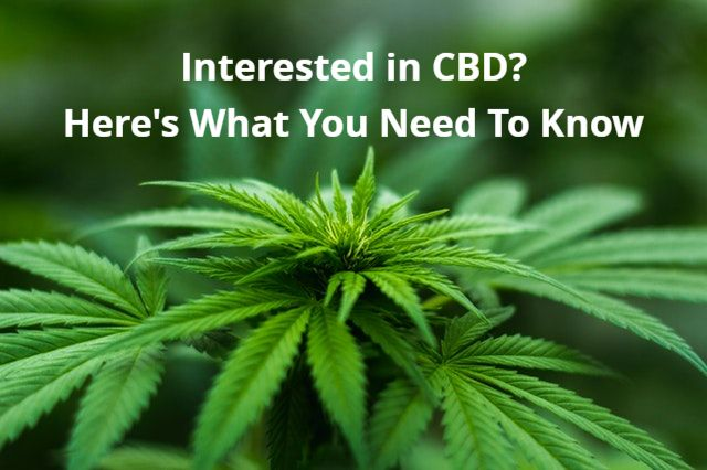 Interested In CBD? Here's What You Need To Know